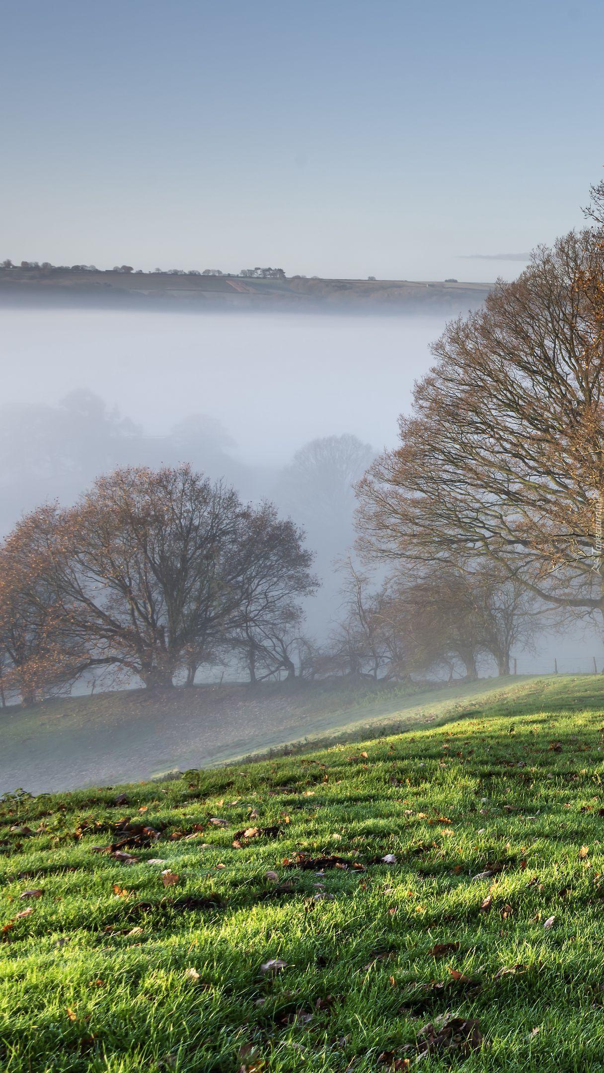 Zamglone drzewa na wzgórzu