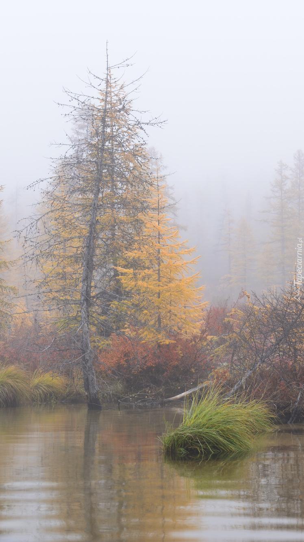 Zamglone drzewa nad jeziorem