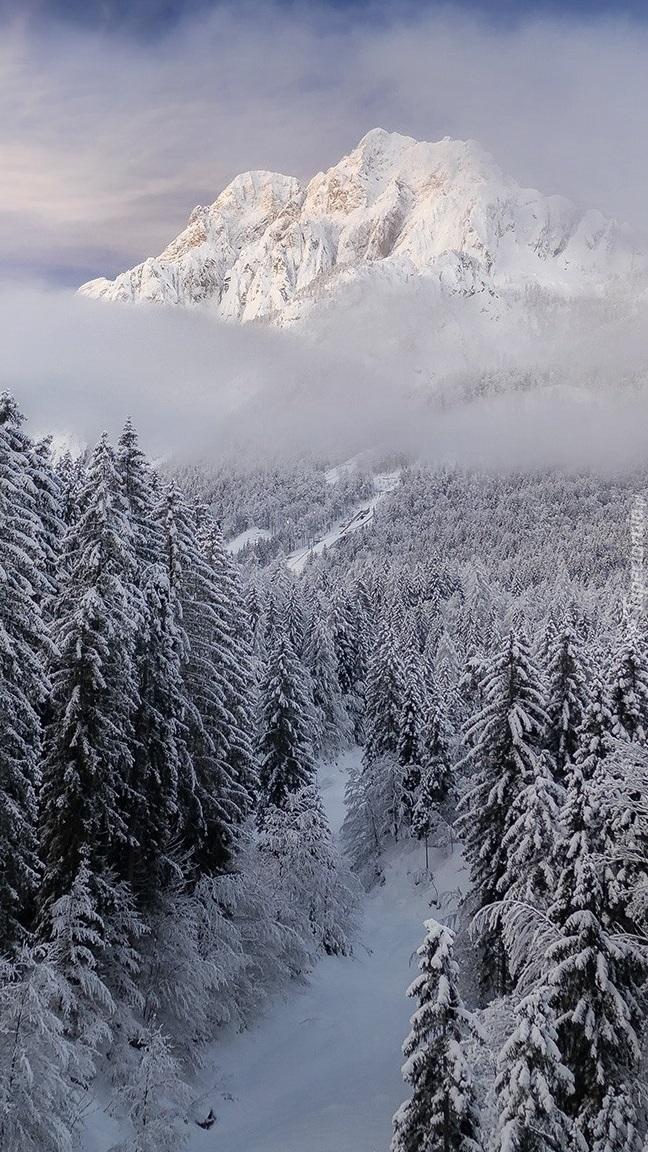 Zamglone góry i ośnieżone drzewa