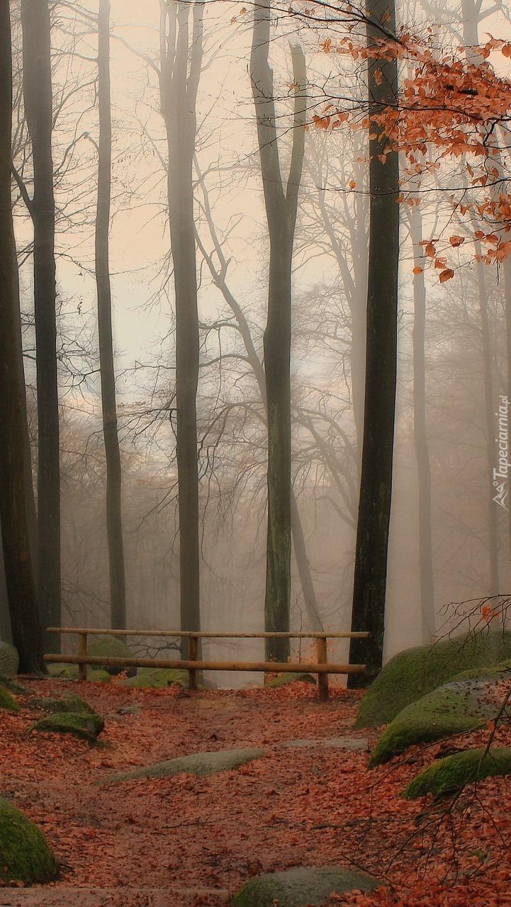 Zamglony jesienny las