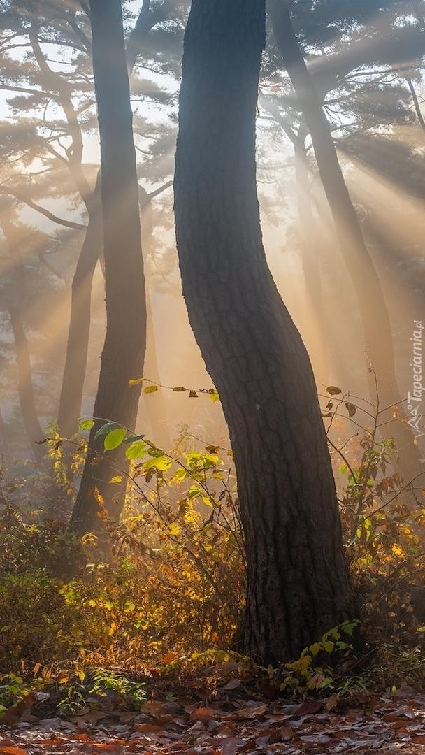 Zamglony las w słonecznym świetle