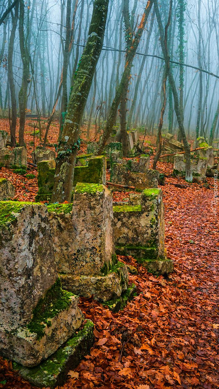 Zaniedbany cmentarz w lesie