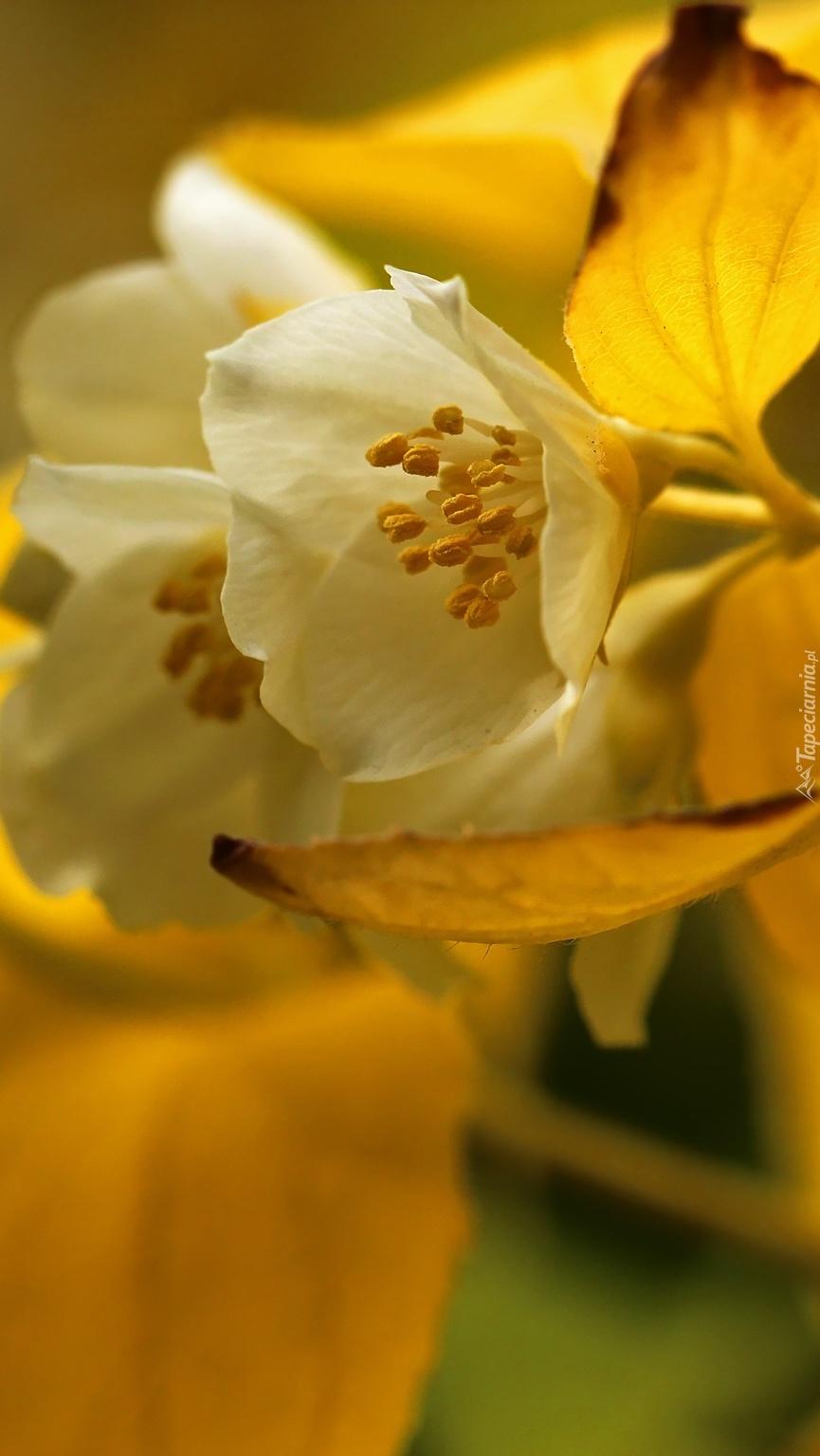 Zapachowy kwiat