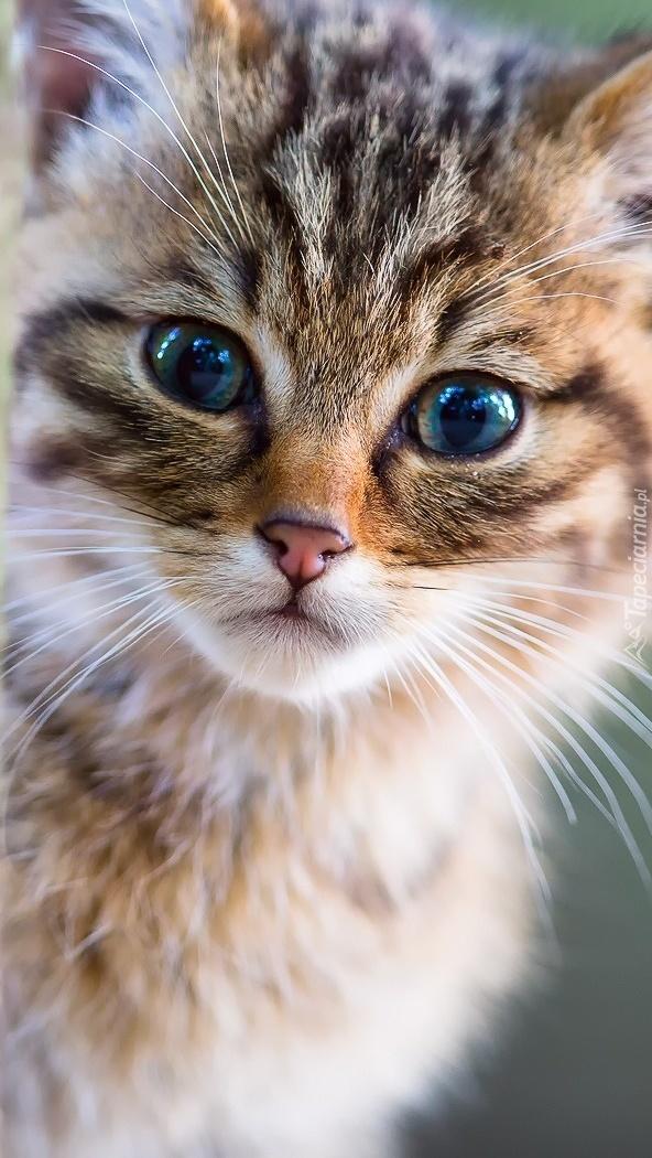 Zapatrzony Kot Tapeta Na Telefon