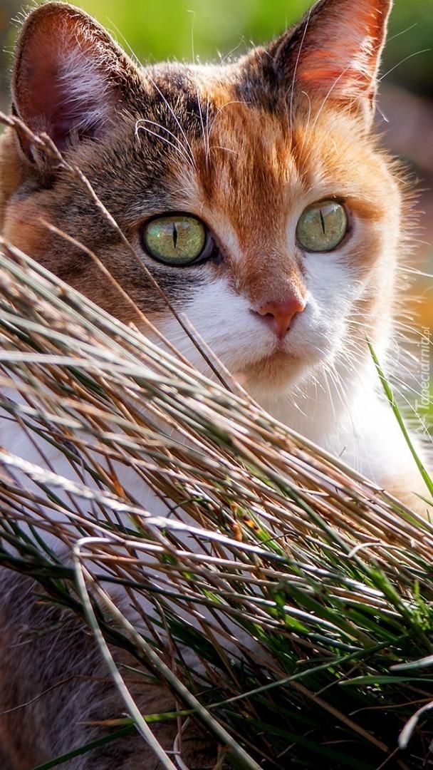 Zapatrzony kot w trawie