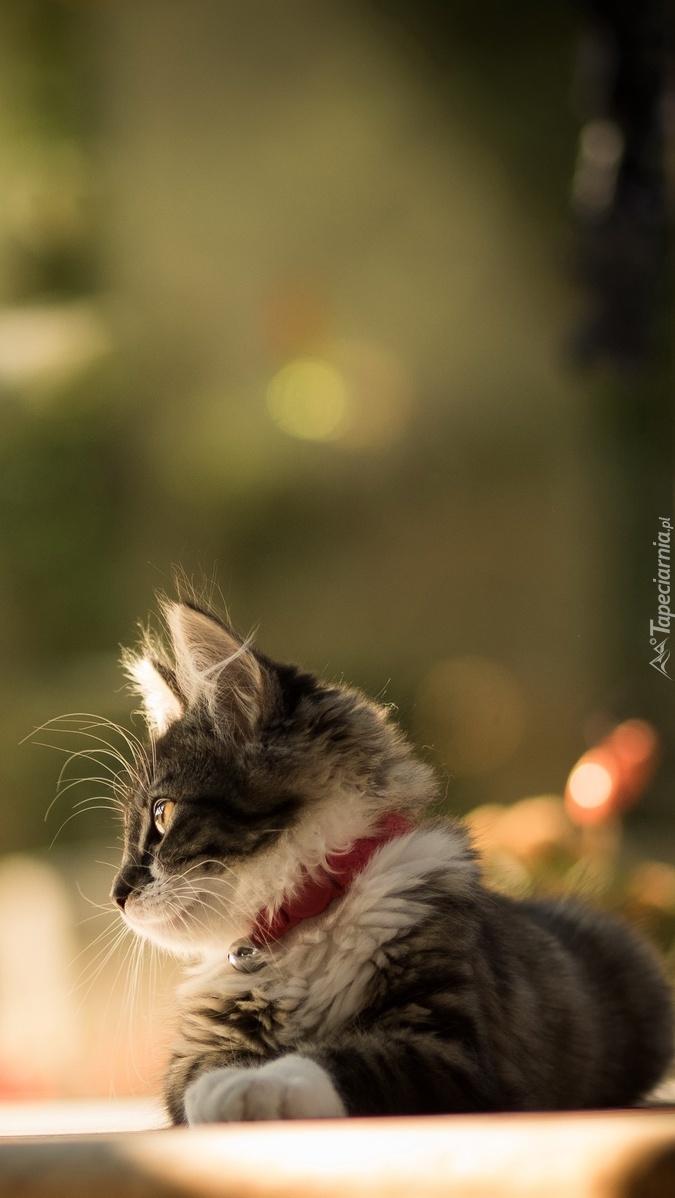 Zapatrzony mały kotek