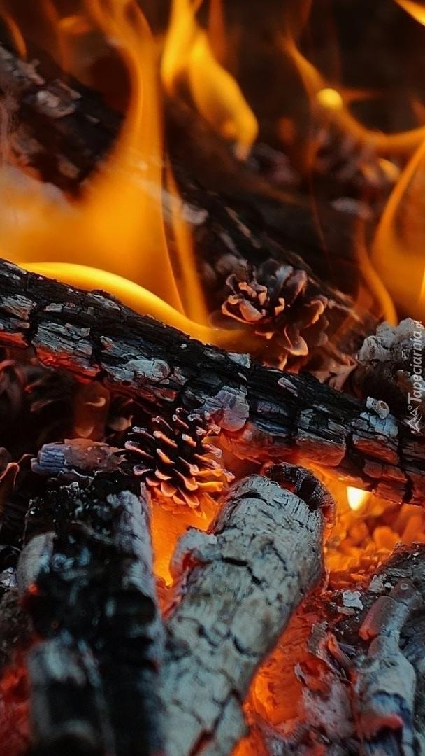 Żar w ognisku
