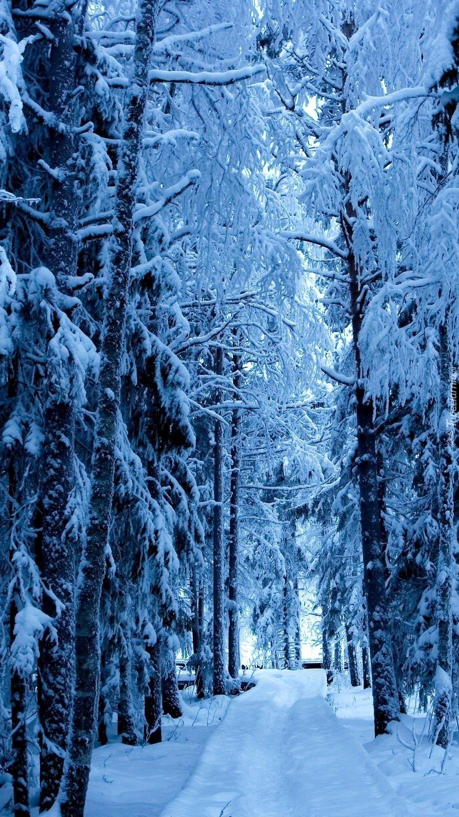 Zaśnieżona droga przez las