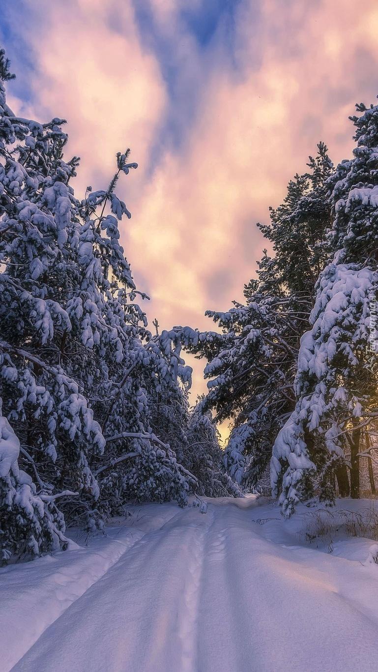 Zaśnieżona droga w lesie