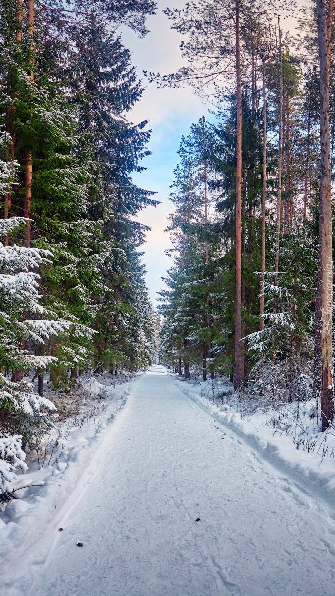Zaśnieżona droga w zimowym lesie