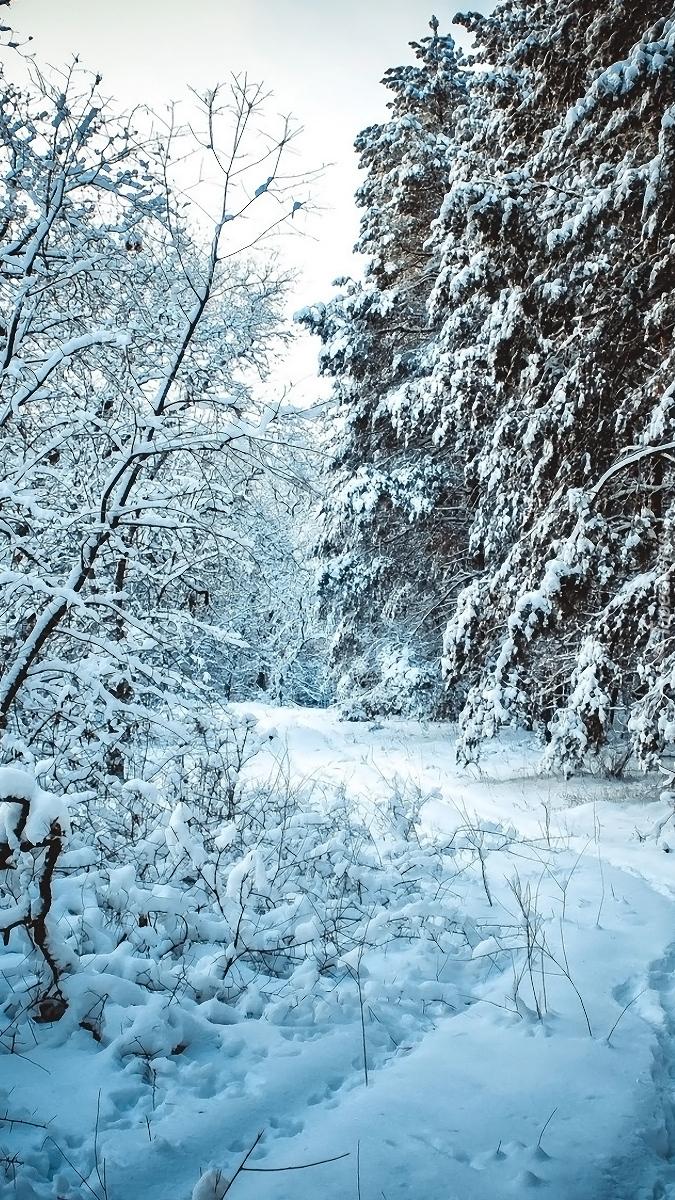 Zaśnieżona dróżka w lesie