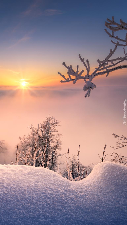 Zaspy i drzewa o wschodzie słońca