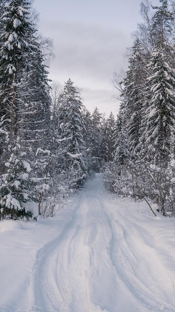 Zasypana śniegiem droga w lesie