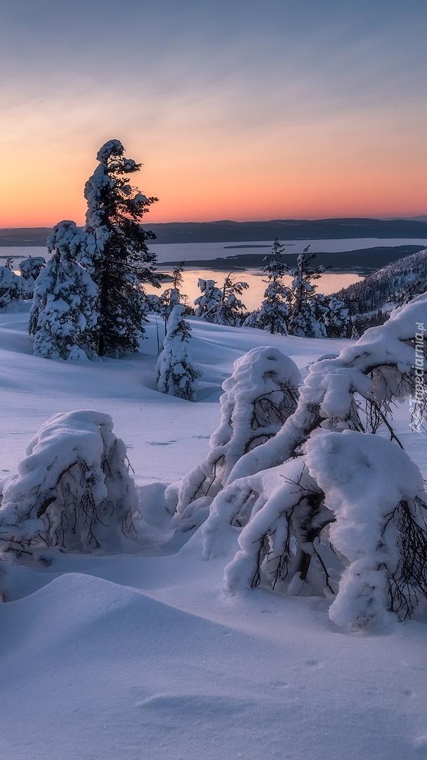 Zasypane śniegiem drzewa