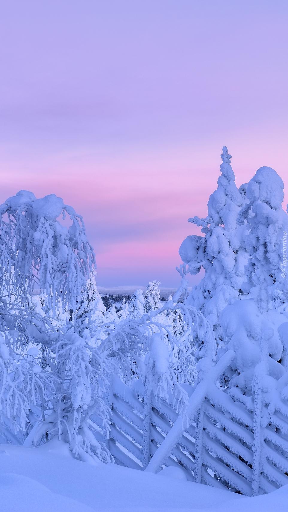 Zasypane śniegiem drzewa przy ogrodzeniu