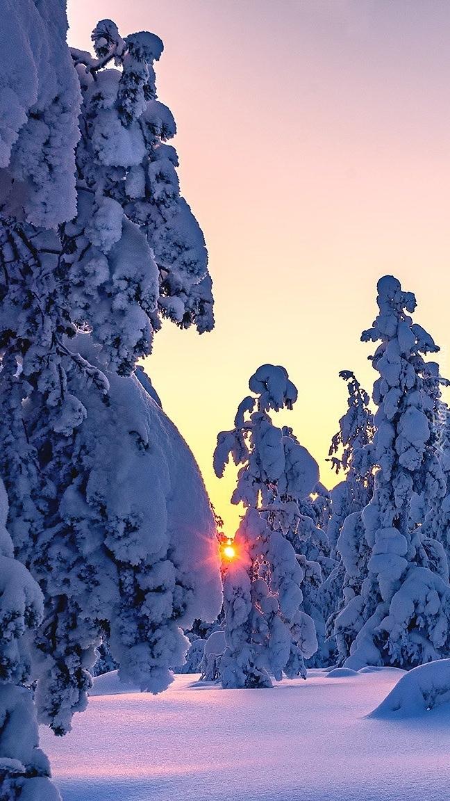 Zasypane śniegiem świerki