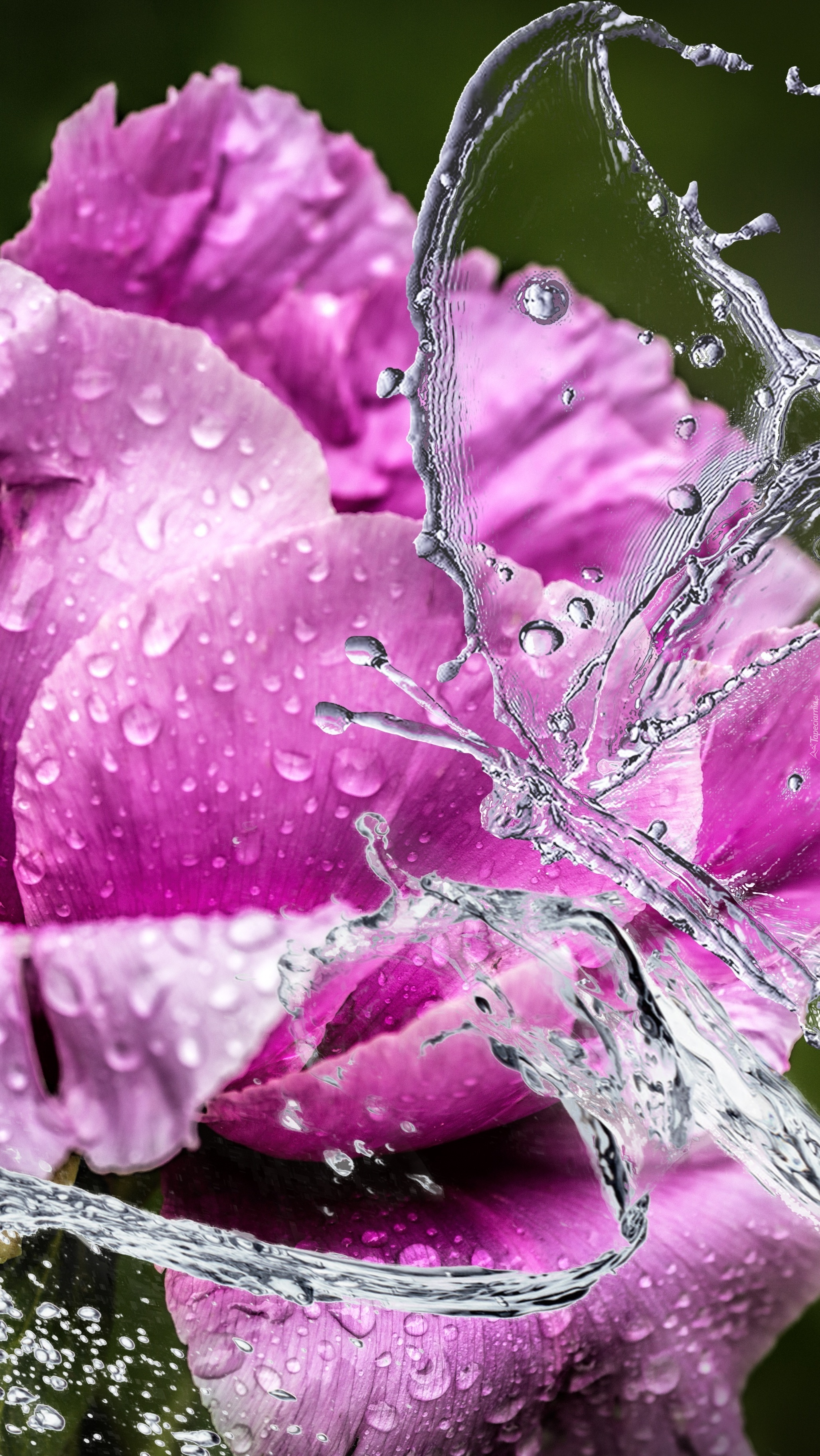 Zbryzgany kwiat