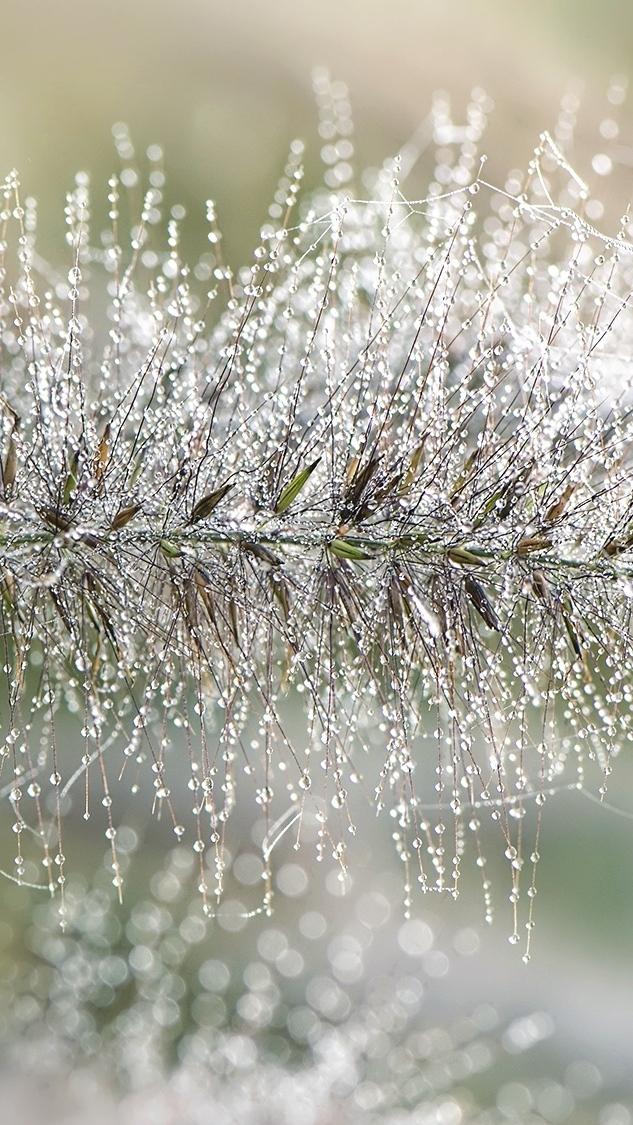 Źdźbło trawy w kroplach