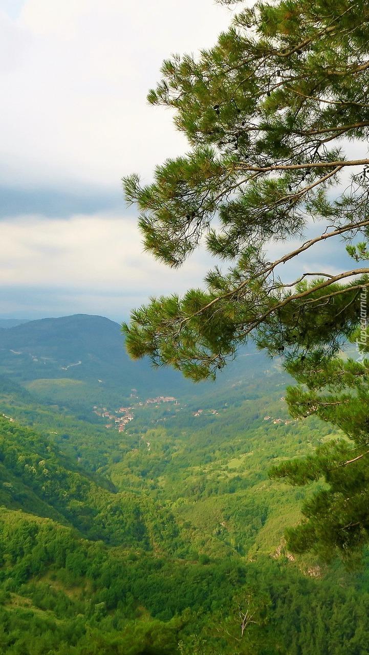 Zielona dolina w górach