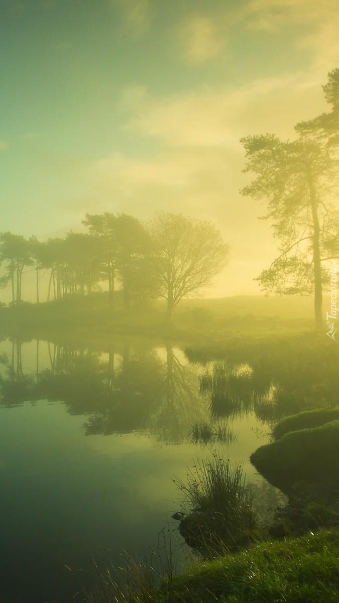Zielona mgiełka nad jeziorem o poranku