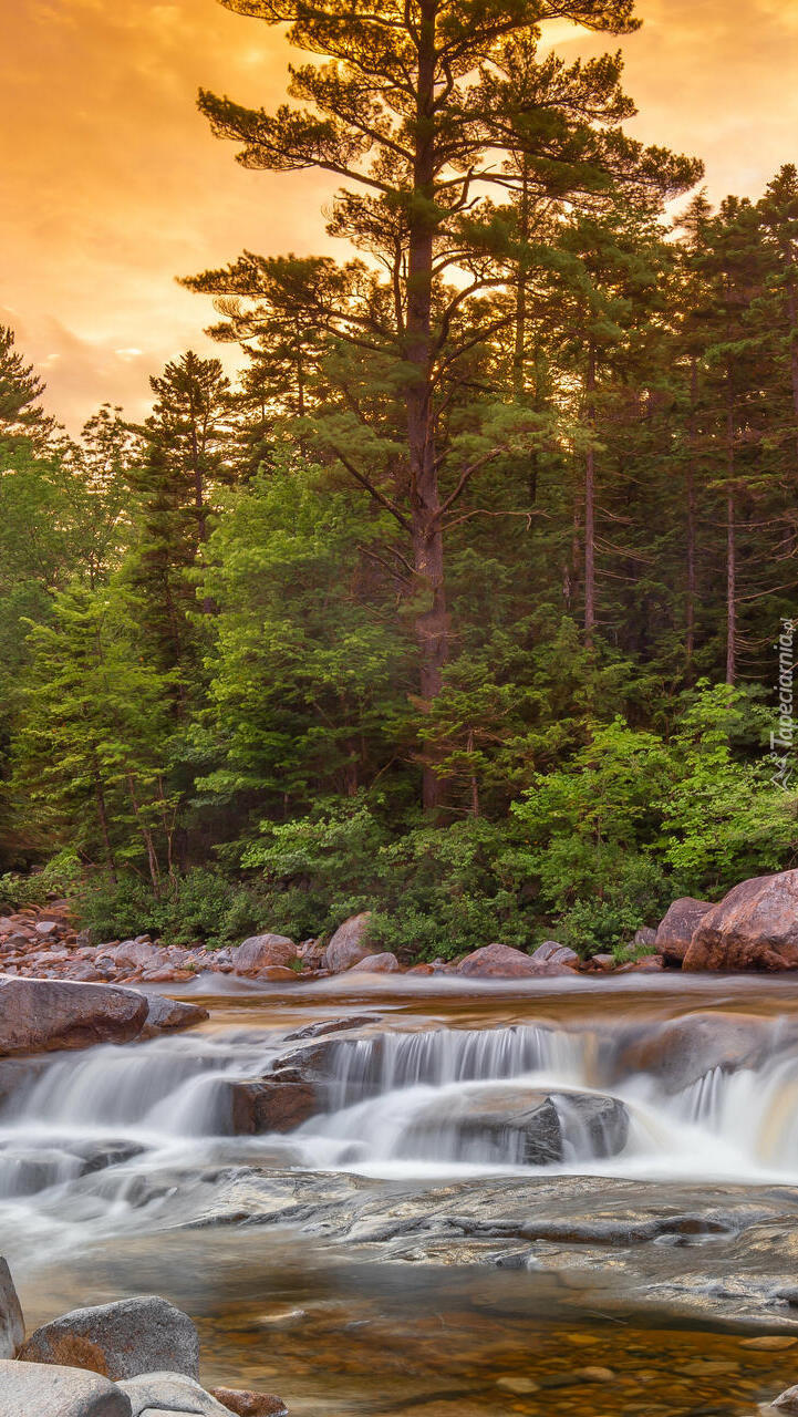 Zielone drzewa i głazy na brzegu rzeki