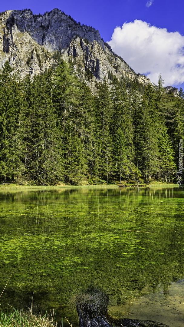 Zielone drzewa i góry nad jeziorem