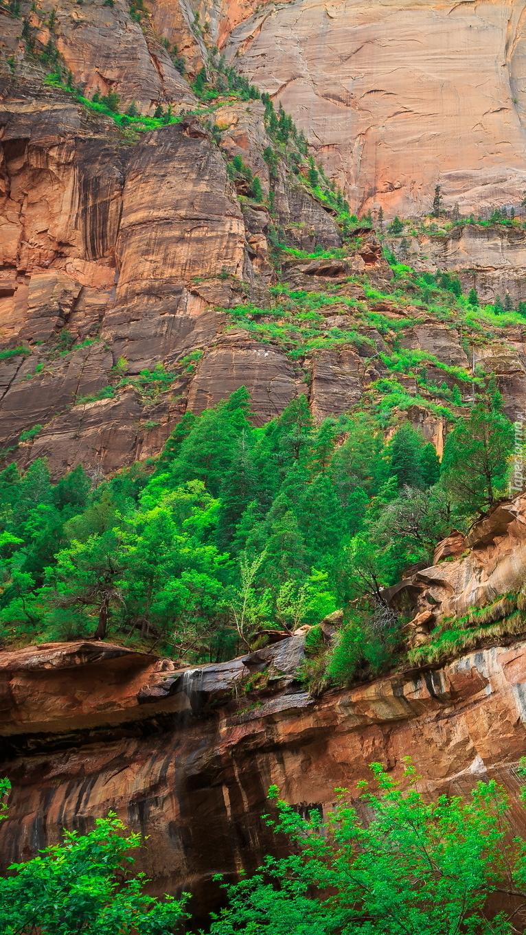 Zielone drzewa na skałach