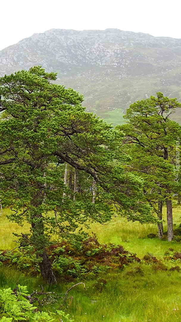 Zielone drzewa na tle góry