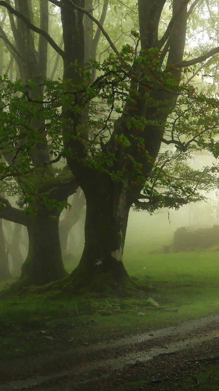 Zielone drzewa we mgle