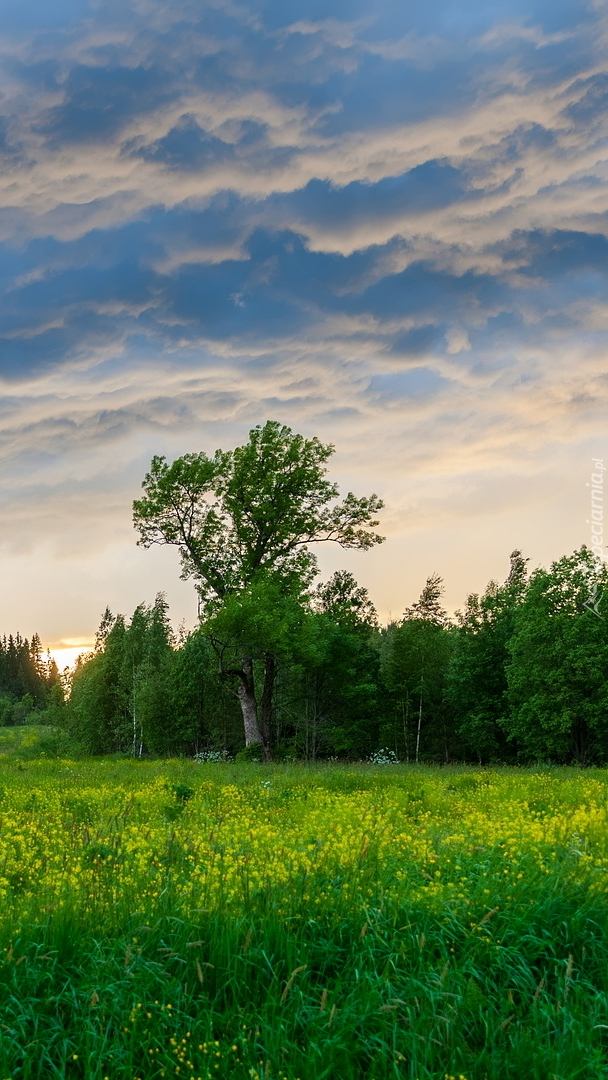Zielone drzewo na łące