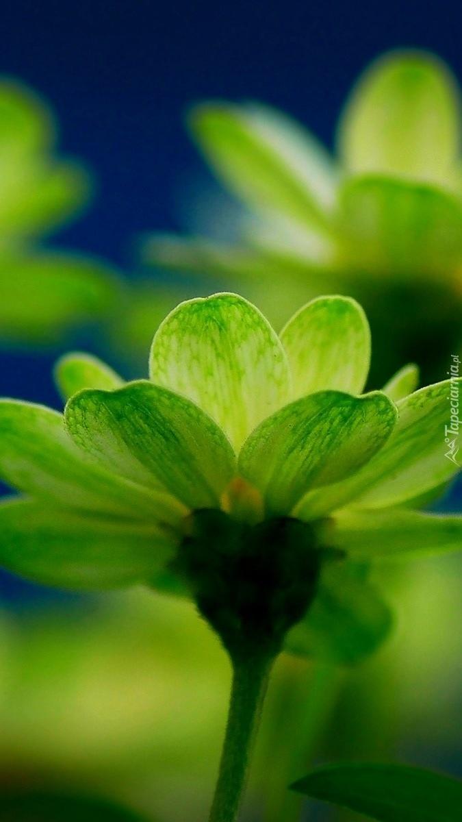 Zielone kwiatki