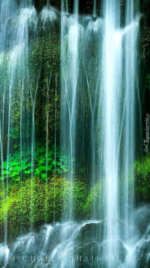 Zielone rośliny pod wodospadem