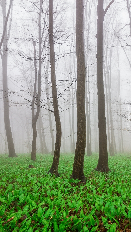 Zielone rośliny wśród zamglonych drzew