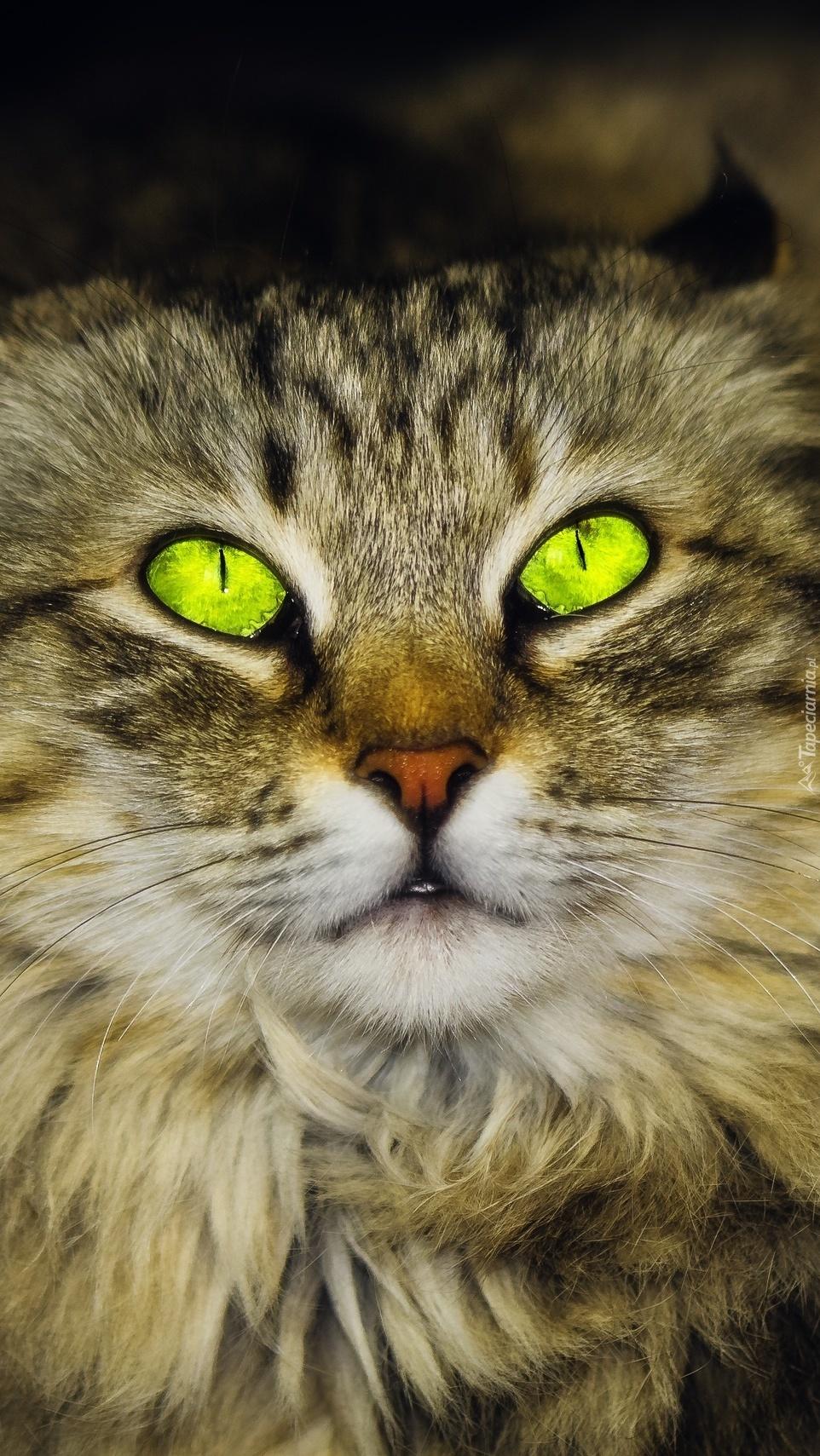 Zielonooki kot