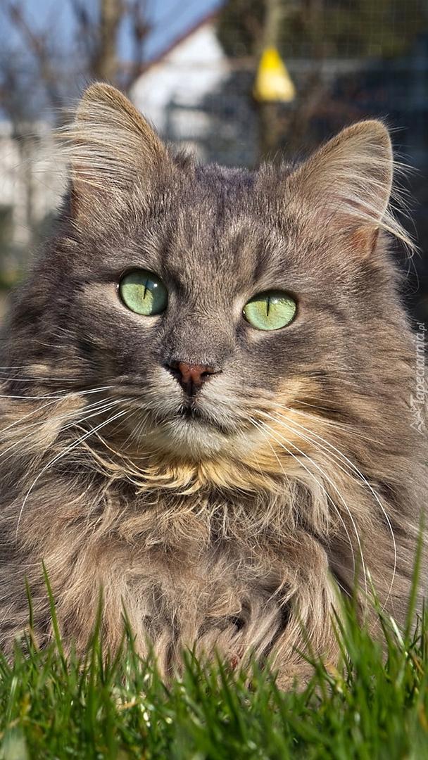 Zielonooki kot w trawie