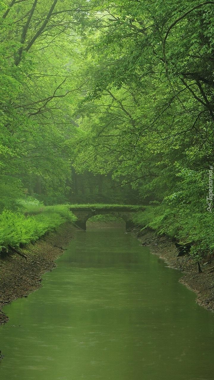 Zielony las z mostkiem nad rzeką