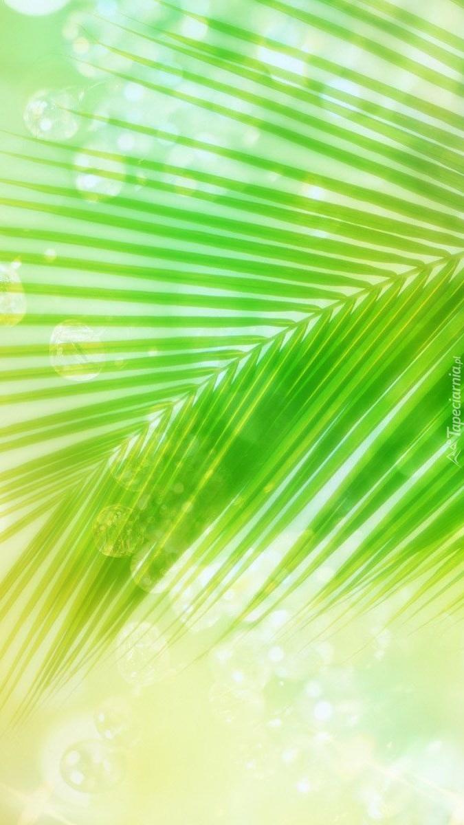 Zielony liść palmy