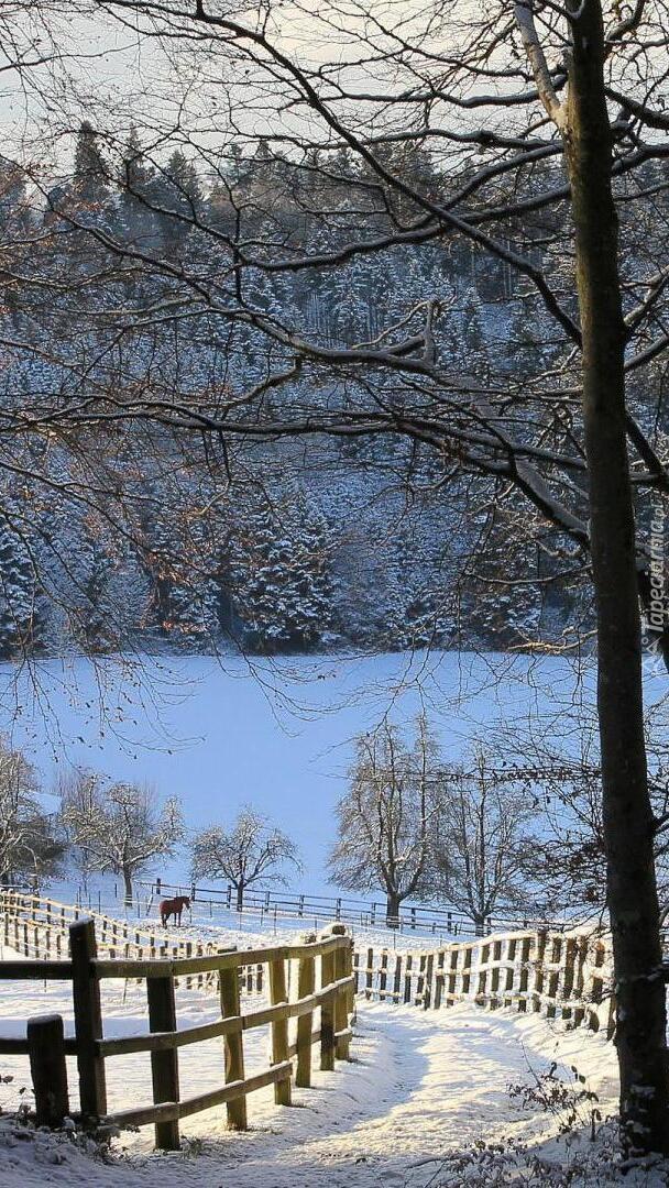 Zima na farmie