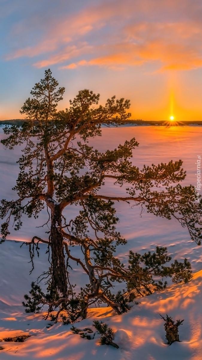 Zima nad jeziorem Ładoga