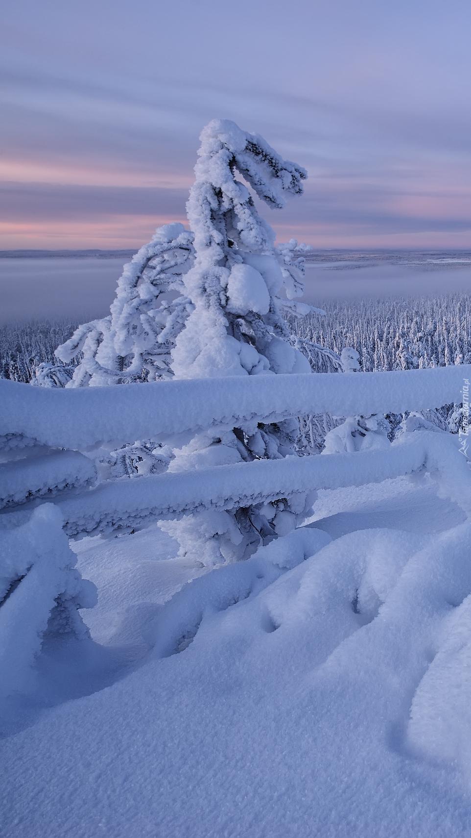 Zima w rezerwacie Valtavaara