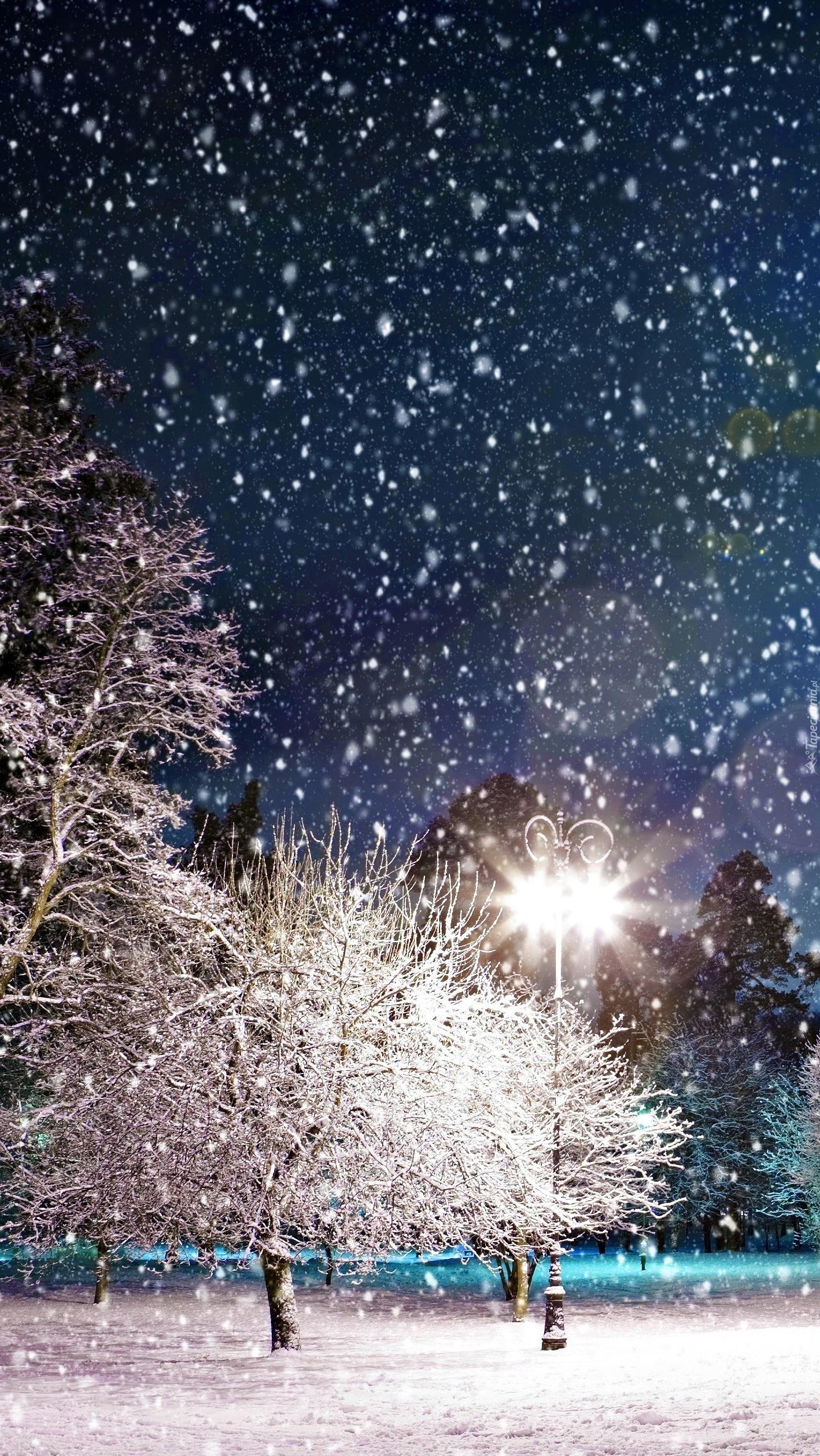 Zimowa noc w parku