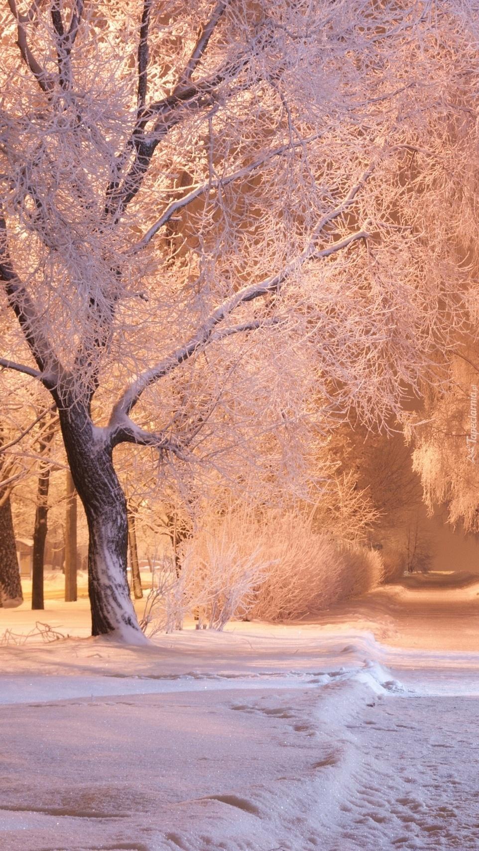 Zimowa ścieżka przez park
