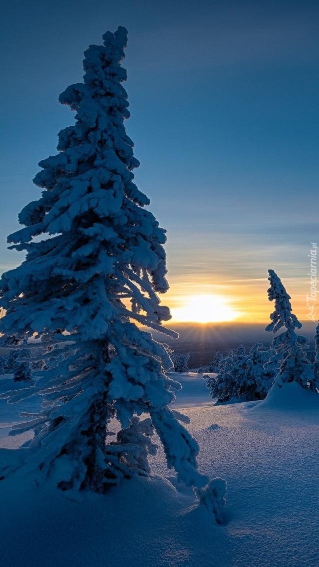 Zimowe drzewa o zachodzie słońca