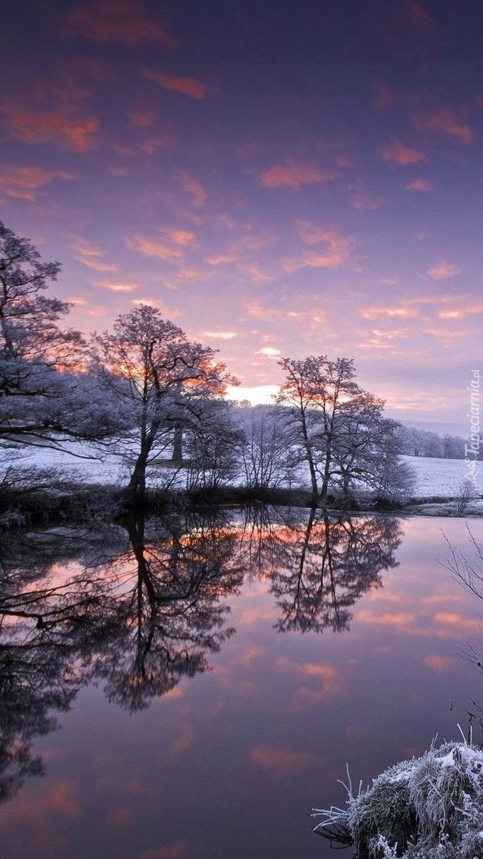 Zimowe drzewa odbite w rzece