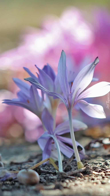 Zimowe kwiatki