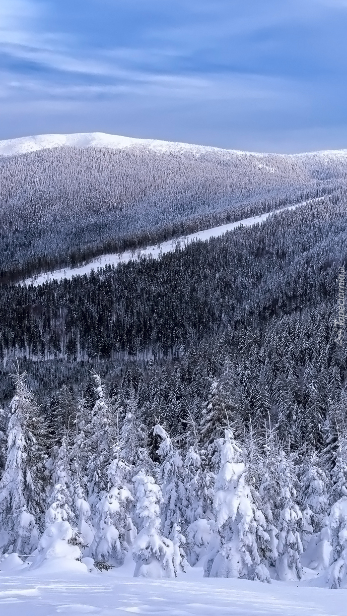 Zimowe lasy w górach