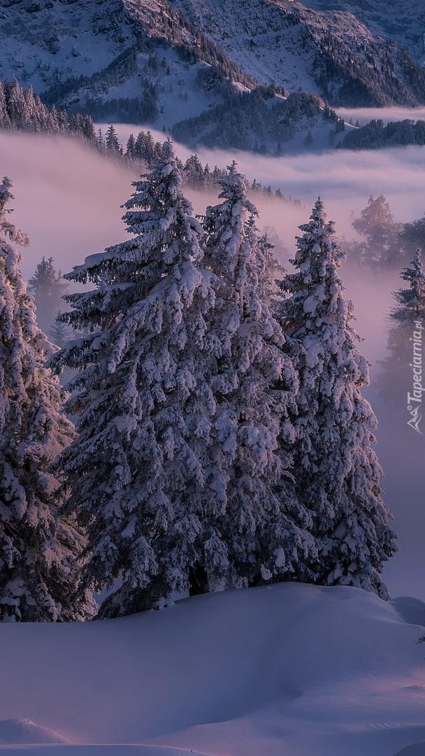 Zimowe świerki w górach