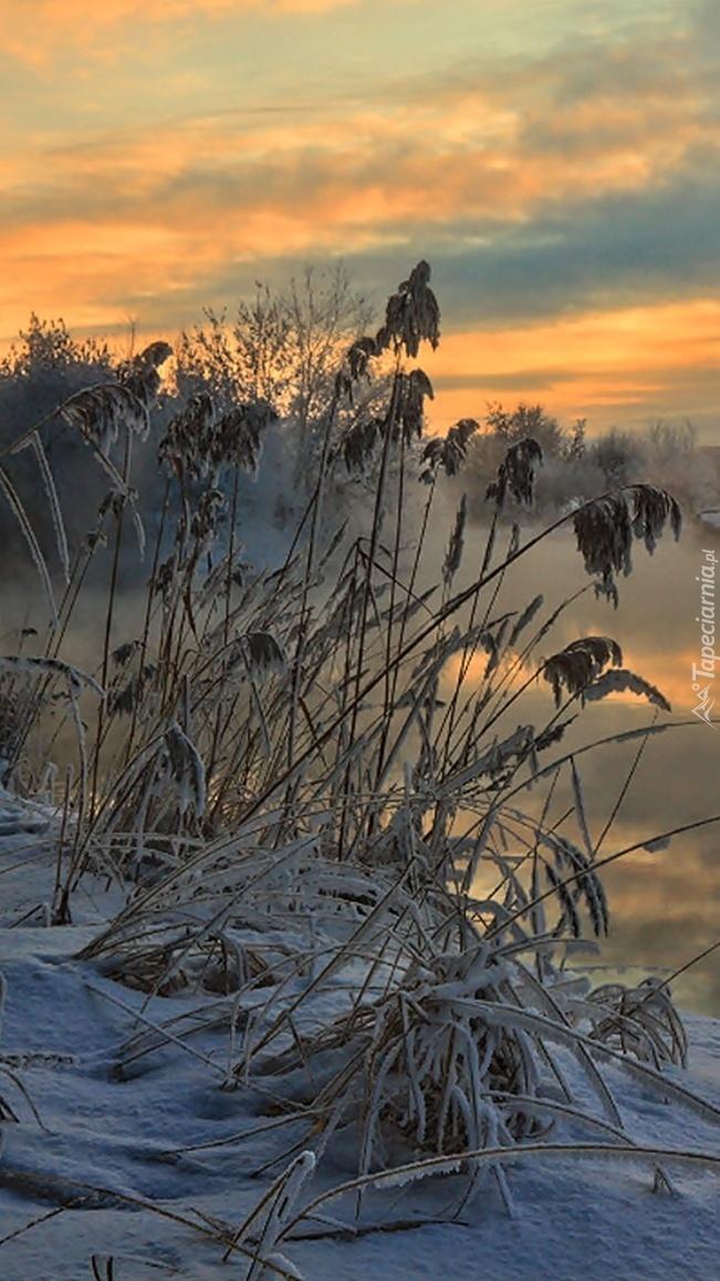 Zimowe trawy