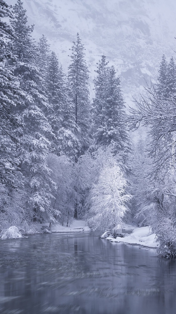 Zimowy las nad rzeką