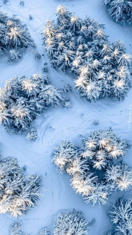 Zimowy las z lotu ptaka